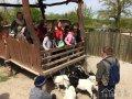 salesianske_stredisko_mladeze_vylet-do-zoo09