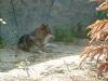 Zoo kroužky 2011
